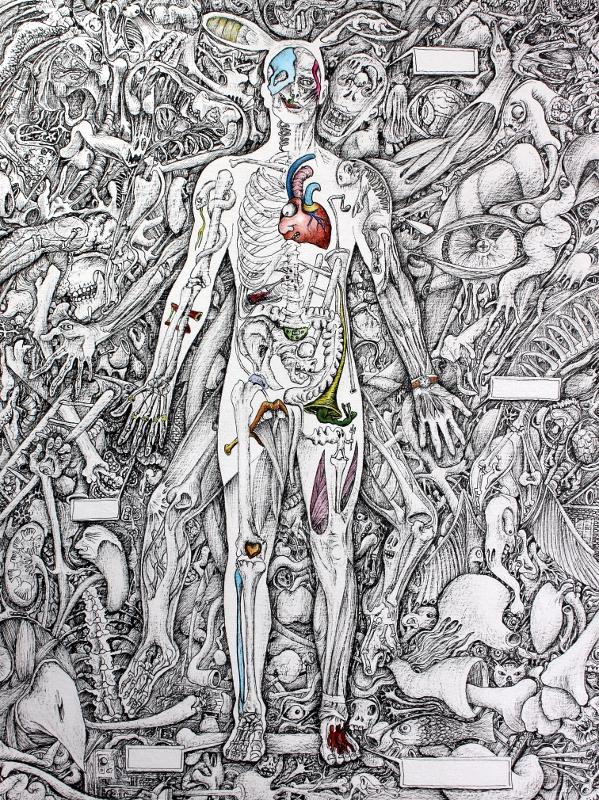 anatomique12.JPG