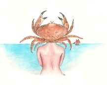 Coquillage et crustacés V°2 - 30 x 40 cm - Stylo/aquarelle sur papier